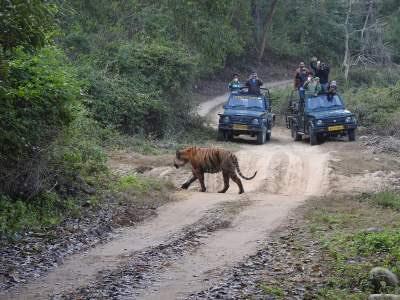 Safari experience in jim corbett national park