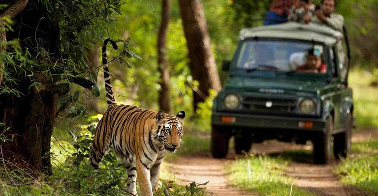 safari booking in jim corbett national park