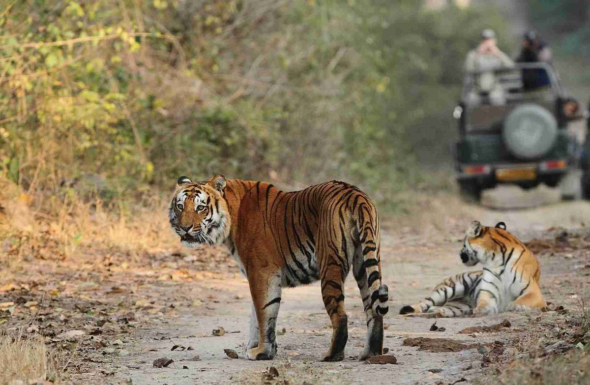 safari booking in jim corbett national park